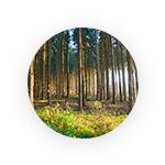 Fondsarten Wald